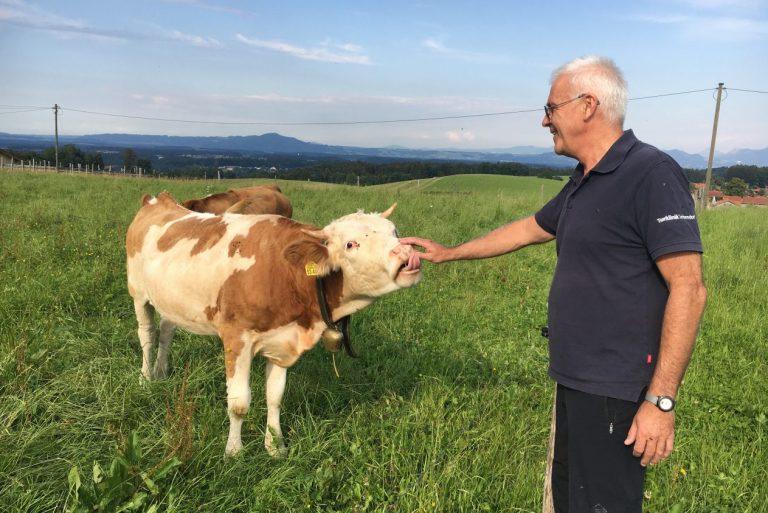 Dr. Waldner Tierarzt Behandlung Rind